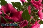 Tabara ARLECHIN- Editia de vara, Constanta 5 - 11 iulie 2013 (10 of 790)